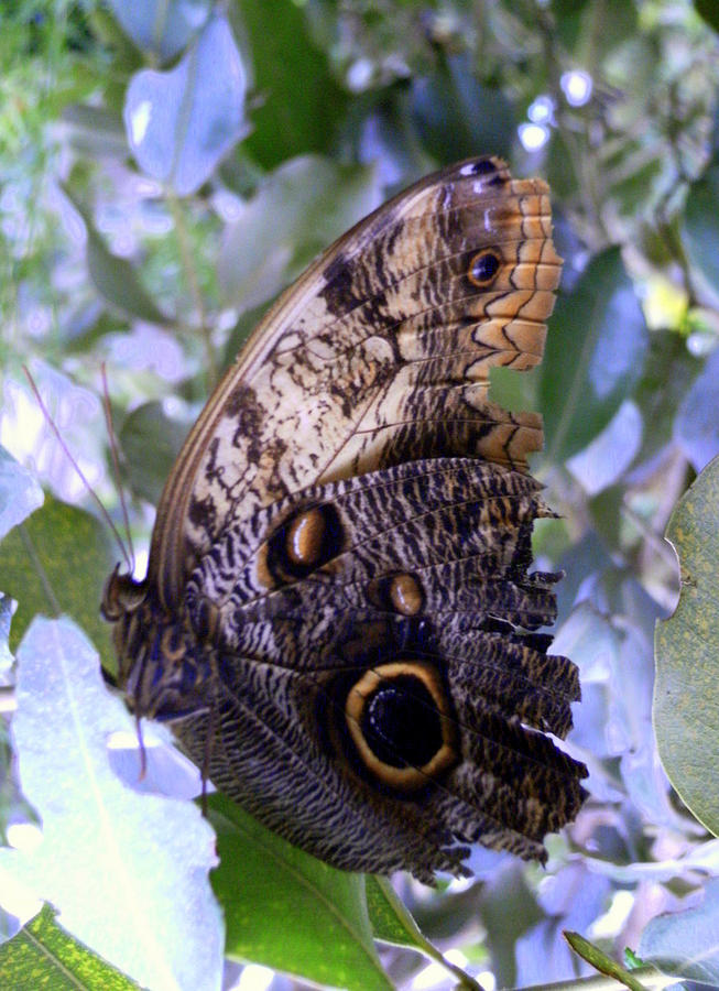 Moth Photograph - Moth On Blue Flowers by Mindy Newman