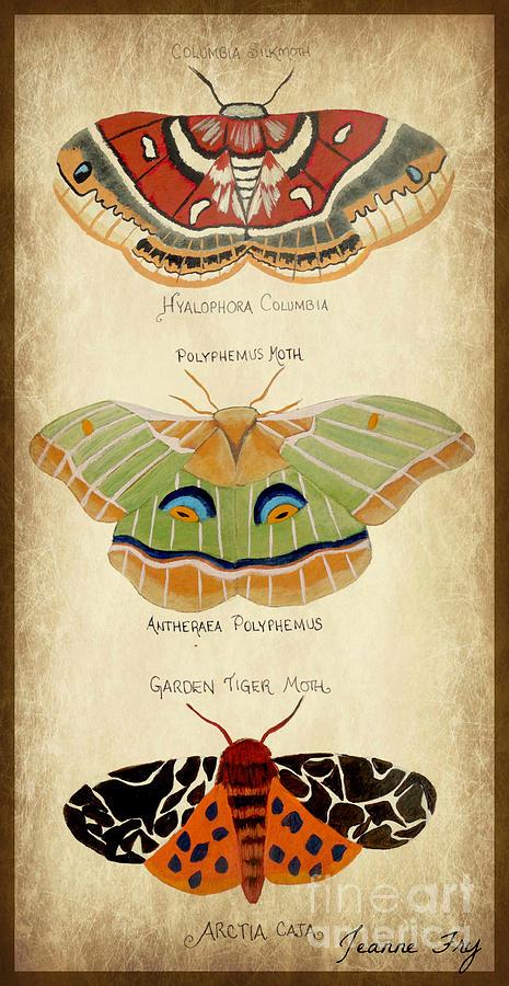 Moth Study by Jean Fry