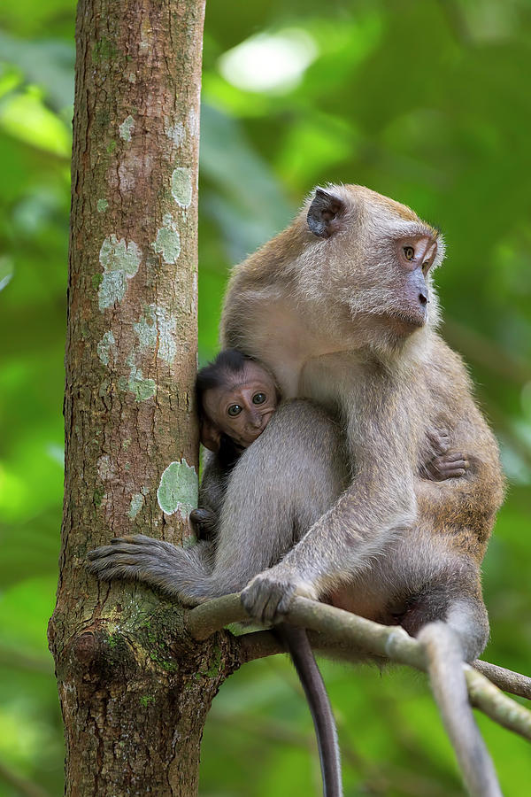 Monkey Photograph - Mother And Baby Monkey by David Gn