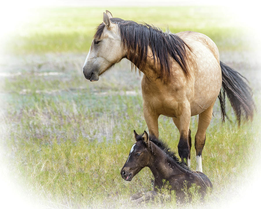Wild Photograph - Mare And Foal by Joe Hudspeth