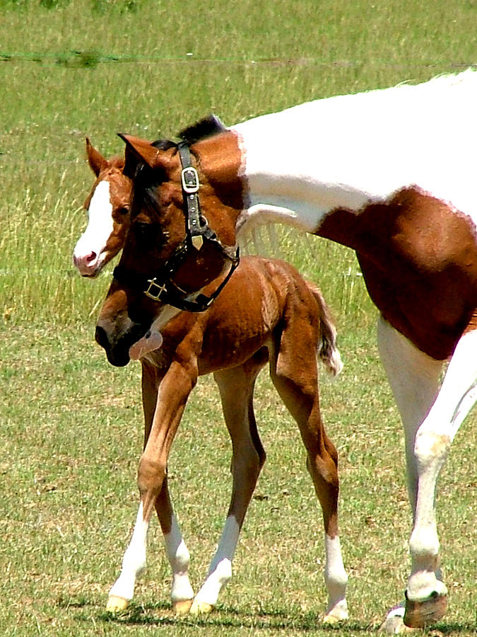 Horse Photograph - Mother And Newborn by Donna Thomas