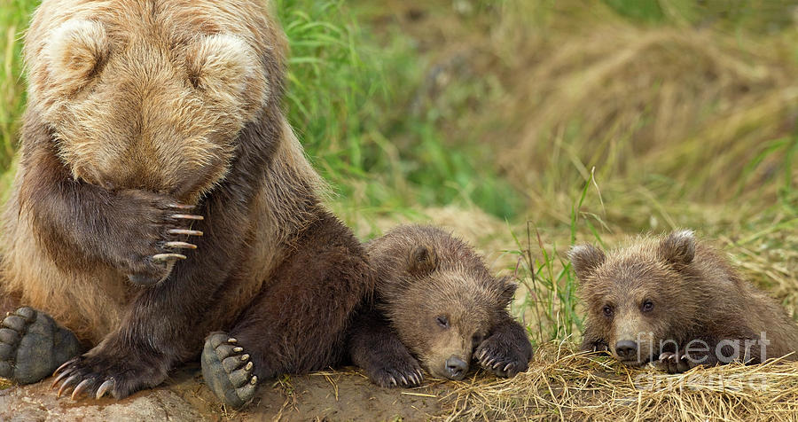 Mother and twin cubs by John Hyde