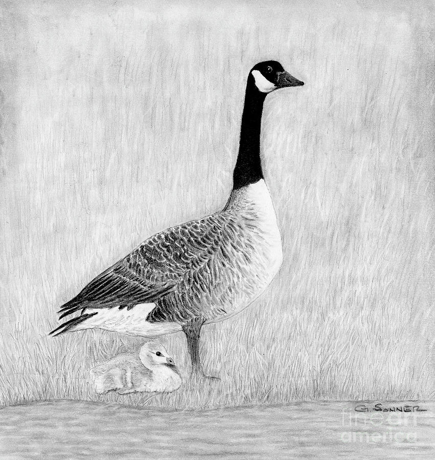 Goose Drawing - Mother Goose by George Sonner