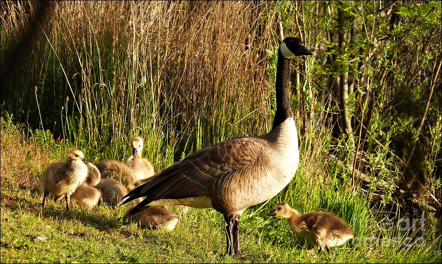 Mother Goose by Julia Hassett