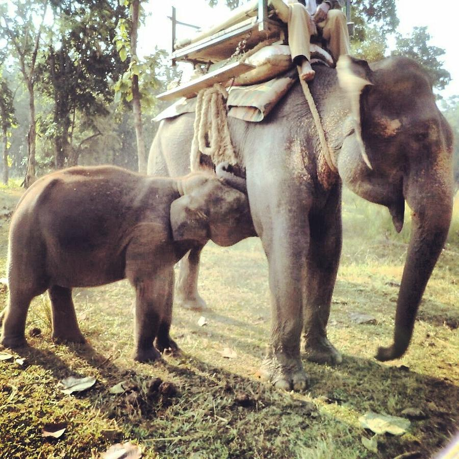 Elephant Photograph - Motherhood  by Khushboo Bhatt