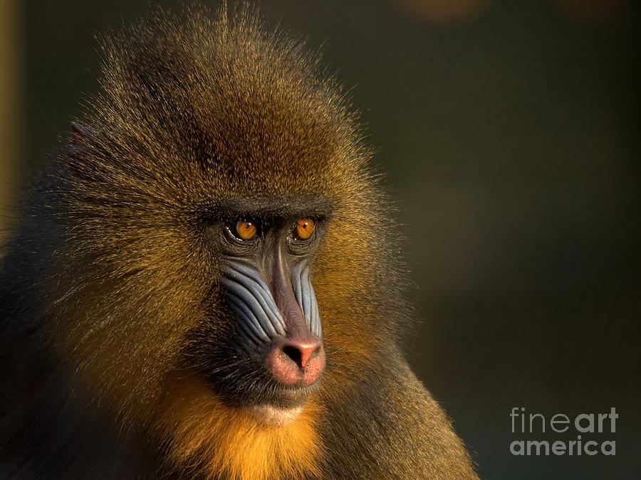 Wildlife Photograph - Mothers Finest by Jacky Gerritsen