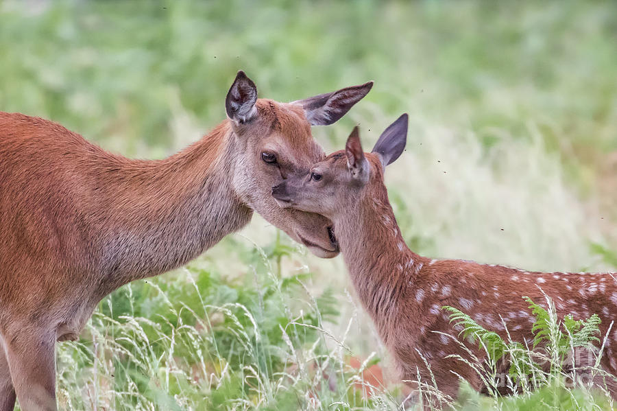 Baby Photograph - Mothers Love by Paul Farnfield