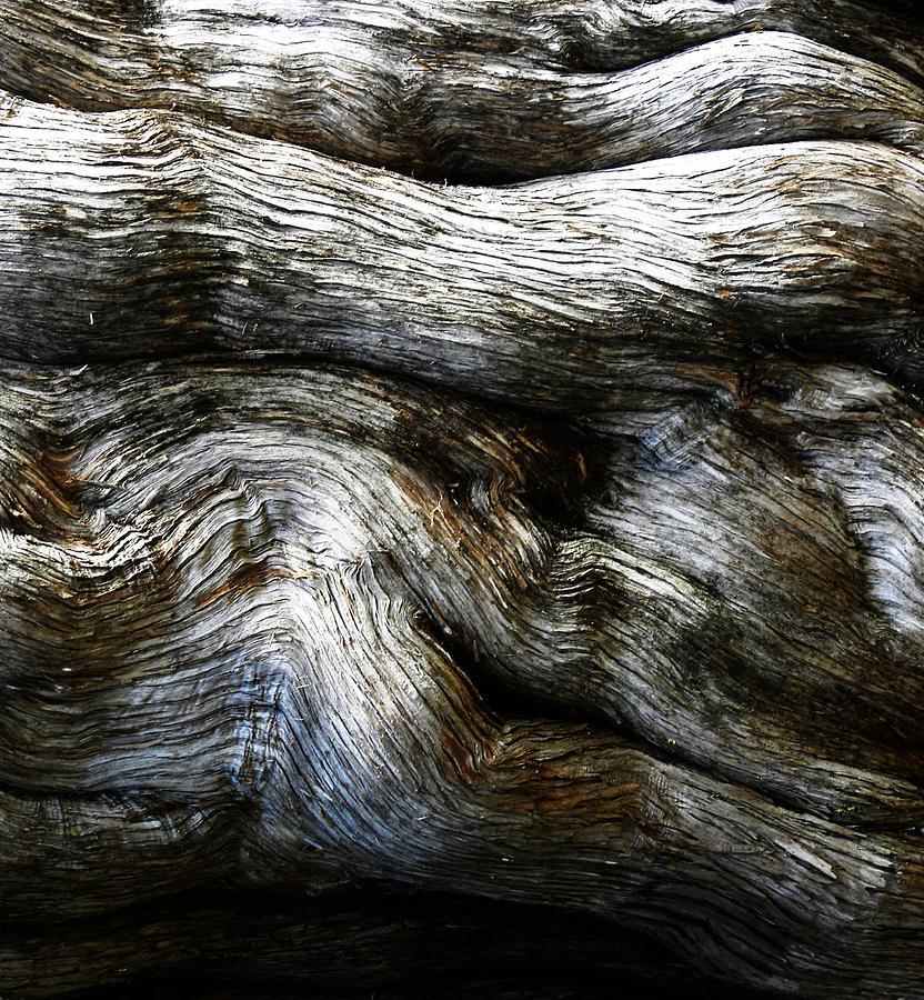 Tree Bark Photograph - Motion by Kim Zwick