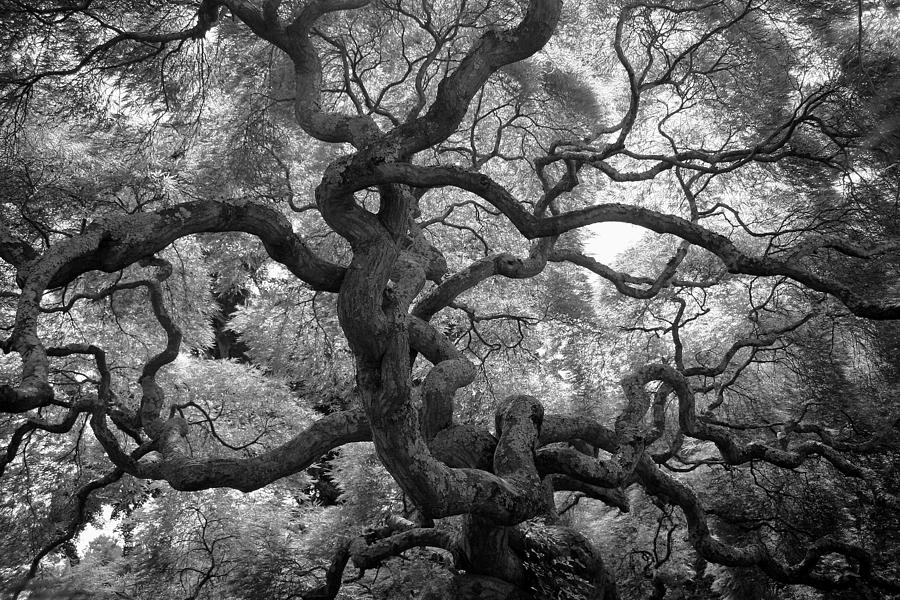 Tree Photograph - Motivations by Mitch Cat