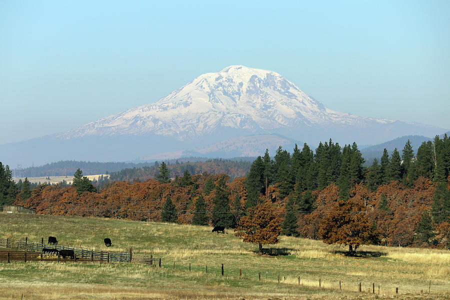 Mount Adams Photograph - Mount Adams Pasture Land by Mary Masters