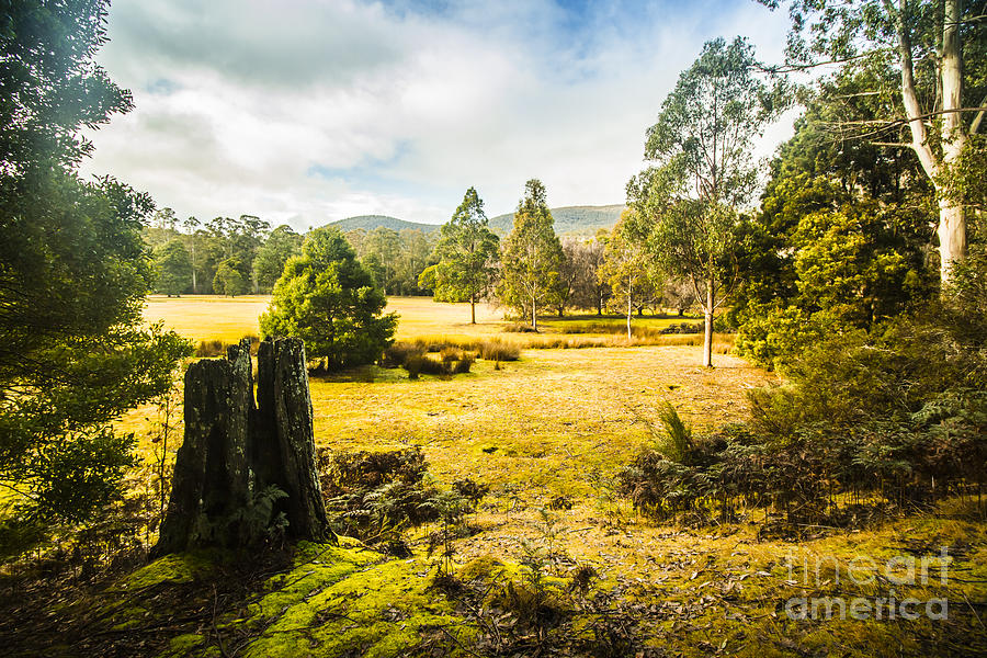 Landscape Photograph - Mount Field Forest In Tasmania by Jorgo Photography - Wall Art Gallery