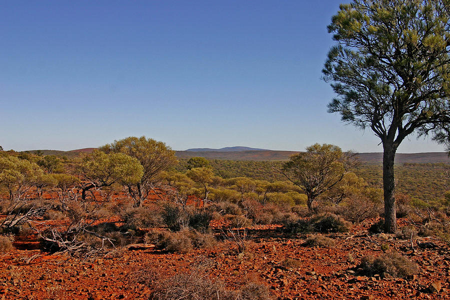 Mount Gibson Station Wa Photograph by Tony Brown