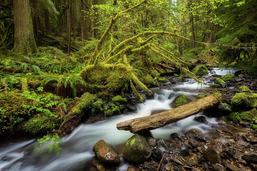 Mount Hood Creek by Jon Ares