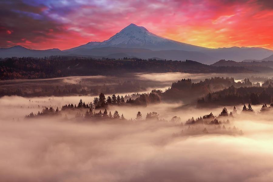 Mount Photograph - Mount Hood Foggy Sunrise by David Gn