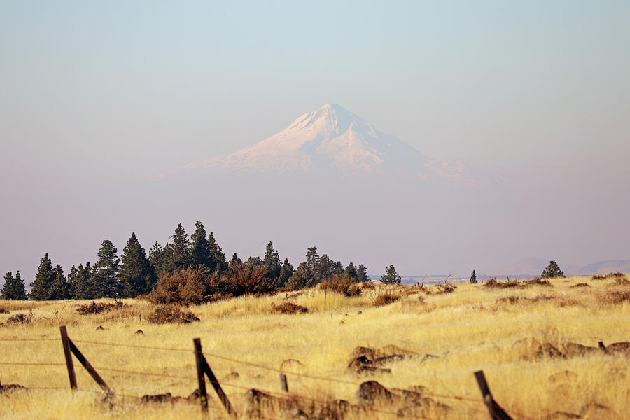 Mount Hood Photograph by Mary Masters