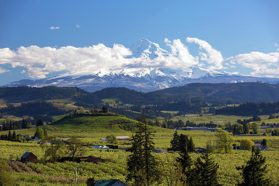 Hood Photograph - Mount Hood Over Fruit Orchards In Hood River by David Gn