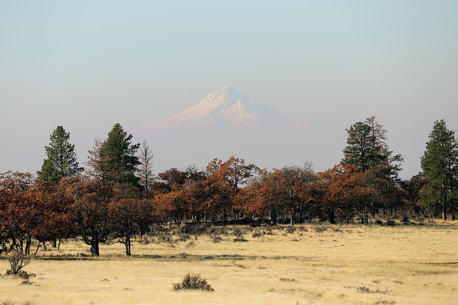 Mount Hood Photograph - Mount Hood Over The Flats by Mary Masters