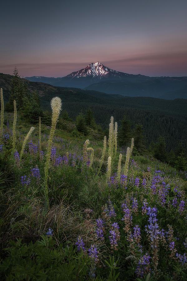 Mount Jefferson From Buck Mountain  Photograph by Jeffrey Green