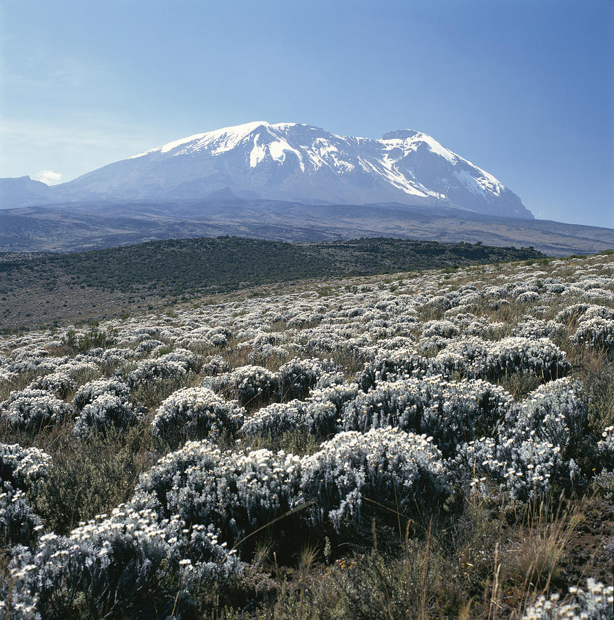 Africa Photograph - Mount Kilimanjaro, The Breach Wall by David Pluth