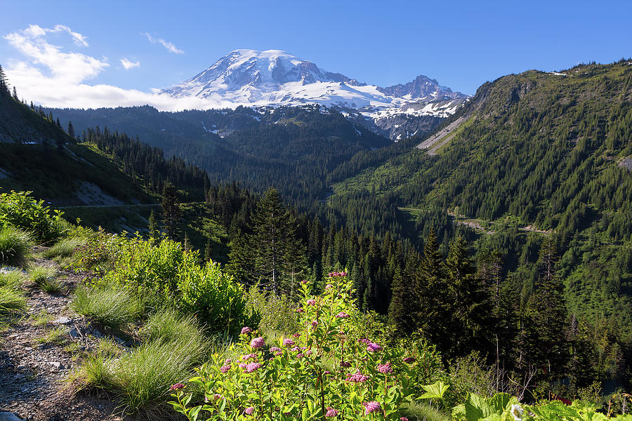 Alpine Photograph - Mount Rainier From Scenic Viewpoint by David Gn