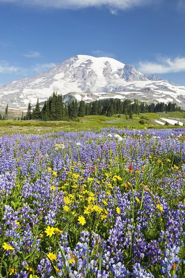 Mt. Rainier Photograph - Mount Rainier National Park by Craig Tuttle