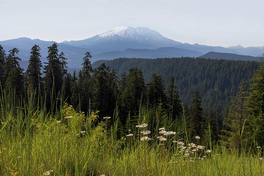 Mount Saint Helens Photograph - Mount St Helens in Washington State by David Gn