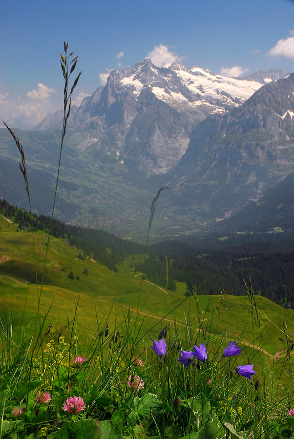 Switzerland Photograph - Mount Wetterhorn And The Grindelwald by Anne Keiser