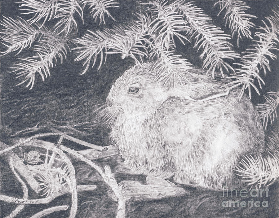 Rabbit Drawing - Mountain Cottontail by Shevin Childers