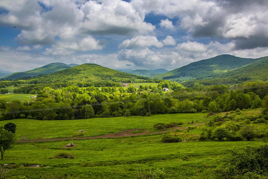 Mountain Field of Greens by Paula Porterfield-Izzo