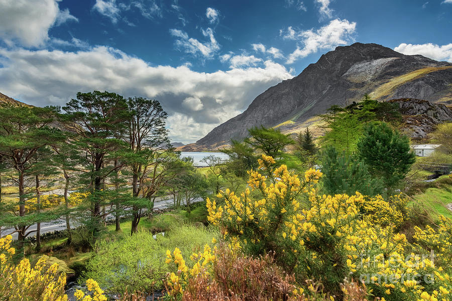 Tryfan Mountain Photograph - Mountain Flora by Adrian Evans