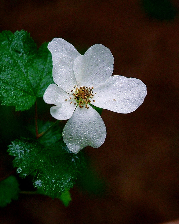 Flower Photograph - Mountain Flower by David Downey
