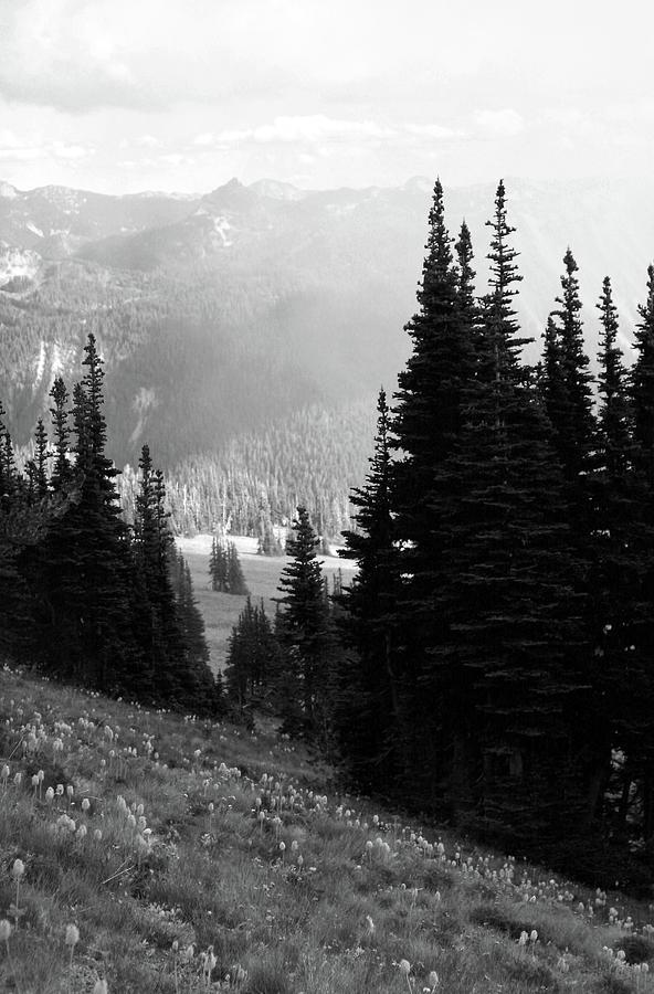 Mountain Flowers by Jenny Mead Chatterton