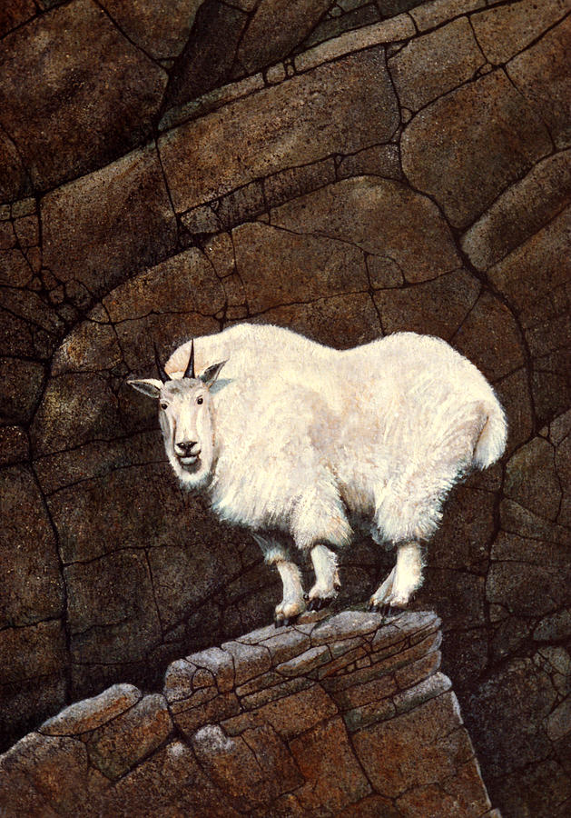 Wildlife Painting - Mountain Goat by Frank Wilson