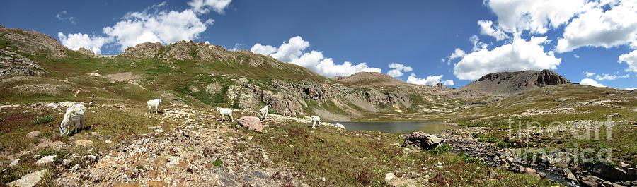 Colorado Photograph - Mountain Goats At Columbine Lake - Weminuche Wilderness - Colorado by Bruce Lemons