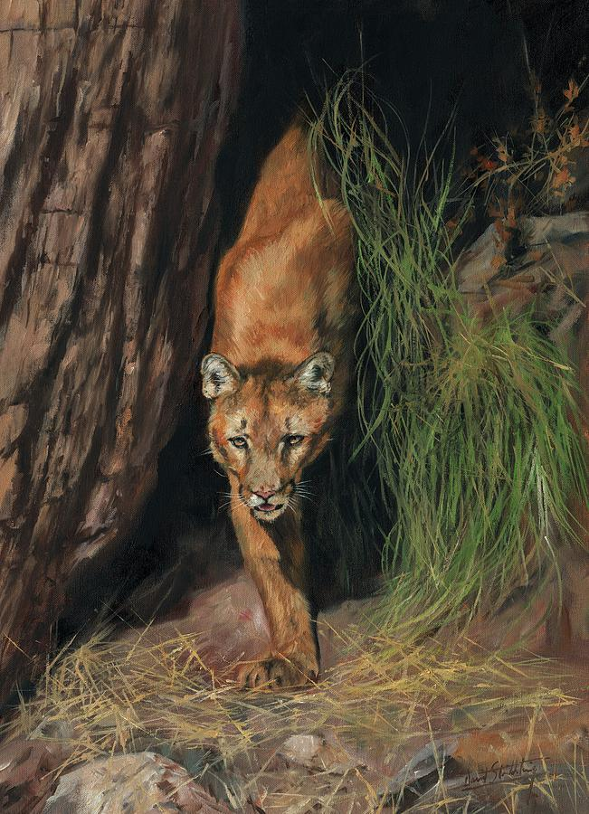 Mountain Lion Emerging From Shadows Painting By David Stribbling