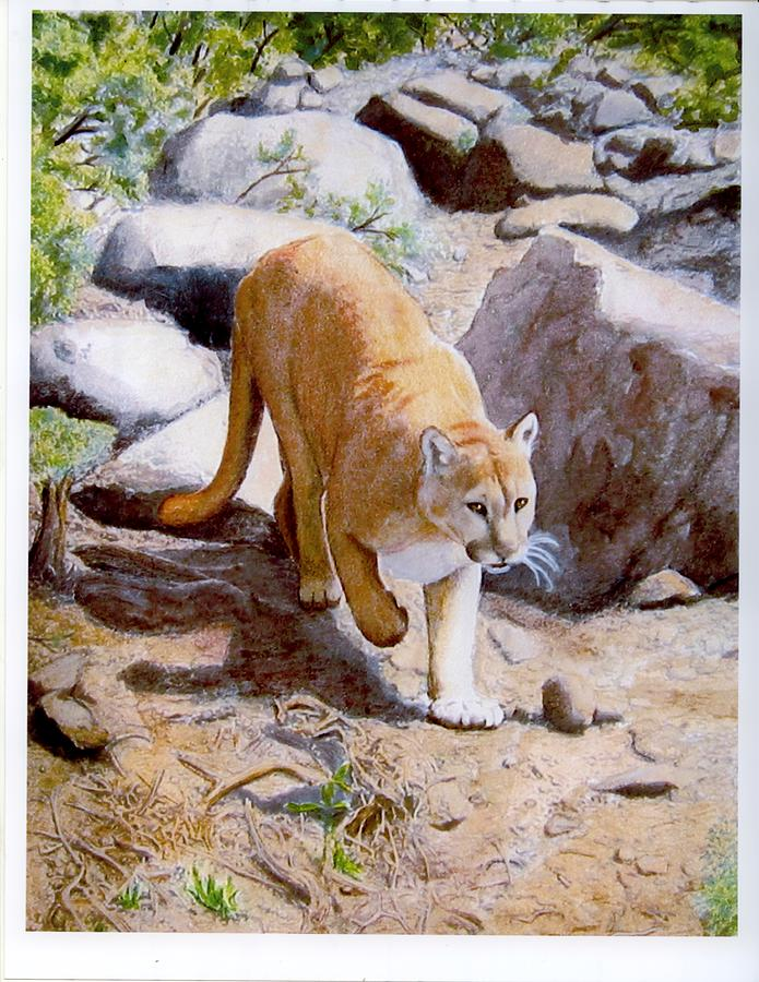 Mountain Lion Painting - Mountain Lion In The Wild by Lorraine Foster