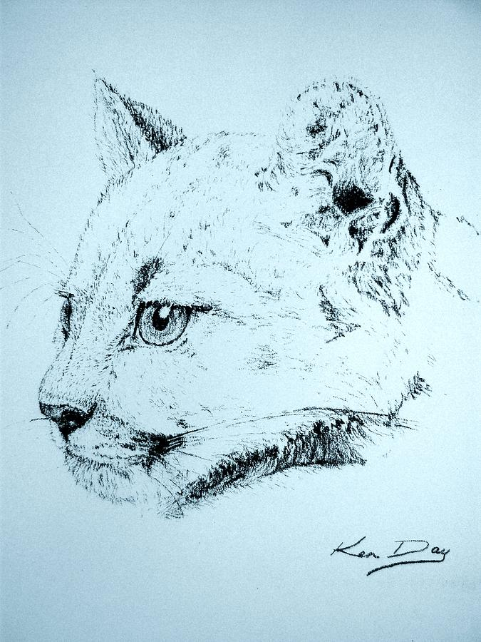 Lion Drawing - Mountain Lion by Ken Day