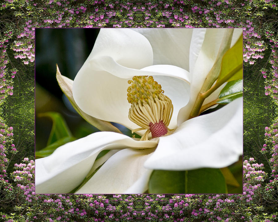 Nature Photos Photograph - Mountain Magnolia by Bell And Todd