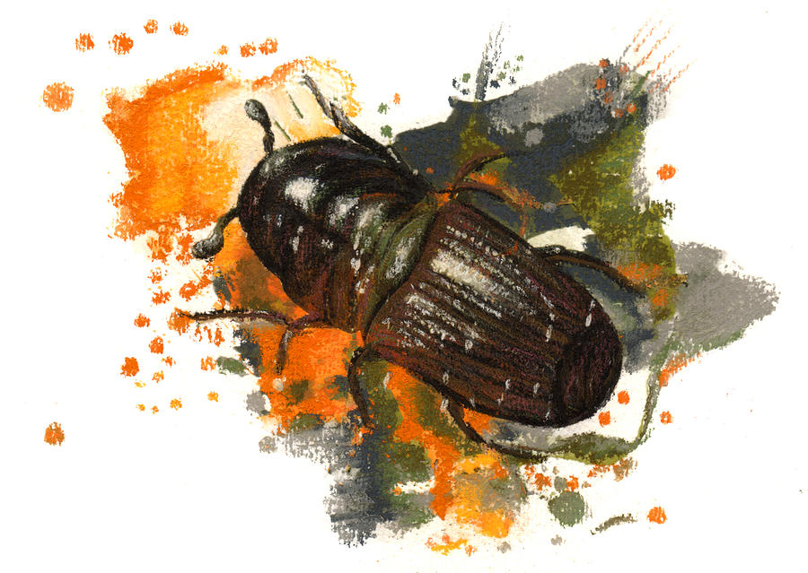 Mountain Pine Beetle Pastel by Janice Lawrence