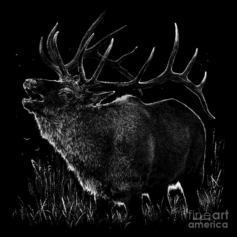 Elk Drawing - Mountain Reveille by Laurie Musser