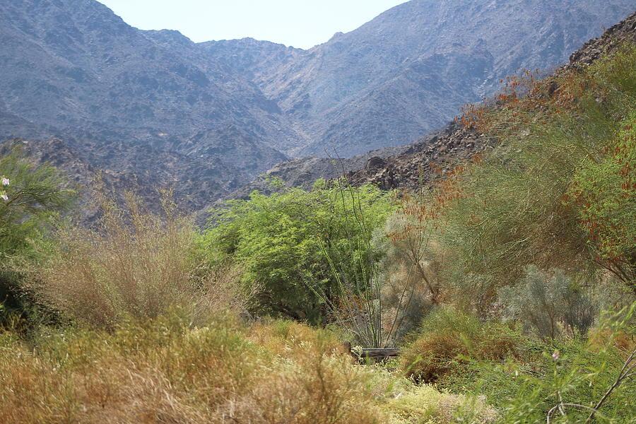 Palm Desert Photograph - Mountain Scene in Palm Desert by Colleen Cornelius