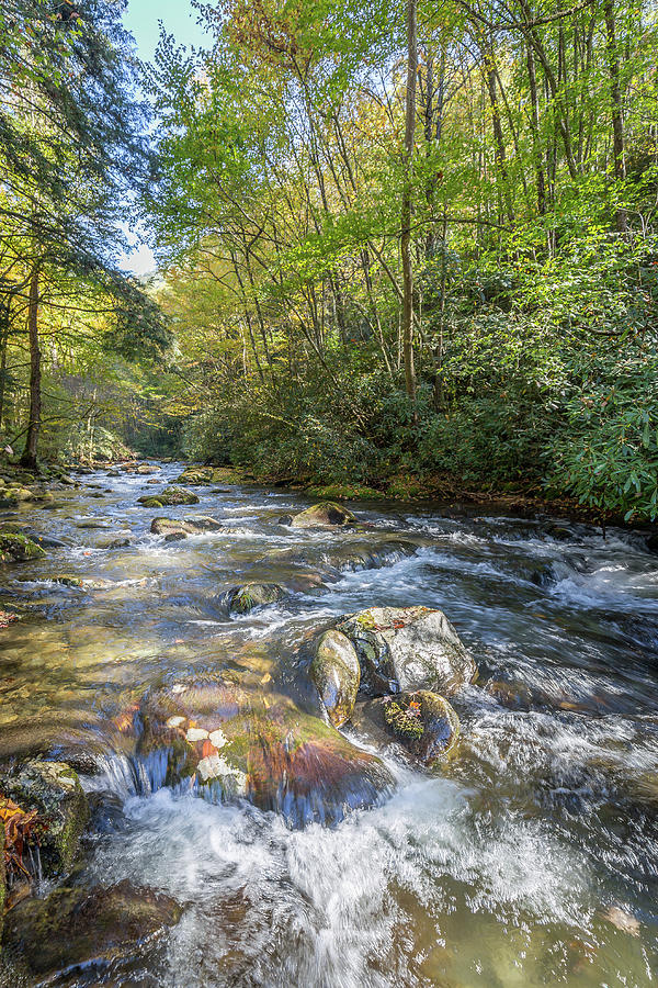 Mountain Stream #3 by Tim Stanley