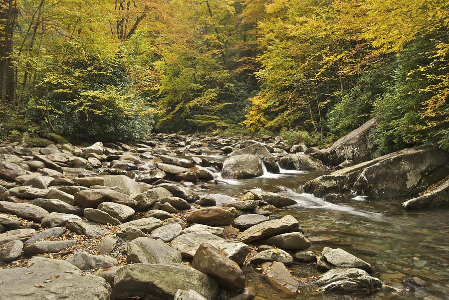 Mountain Stream  6058 Photograph
