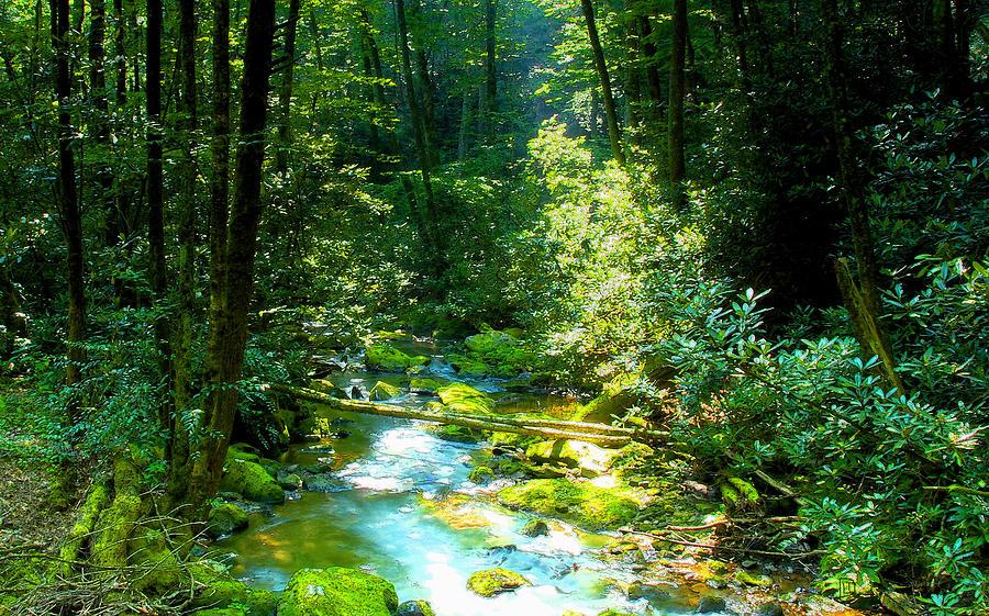 Mountain Stream Painting - Mountain Stream by David Lee Thompson