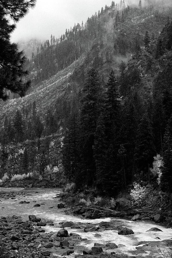 Mountain Stream by Jenny Mead
