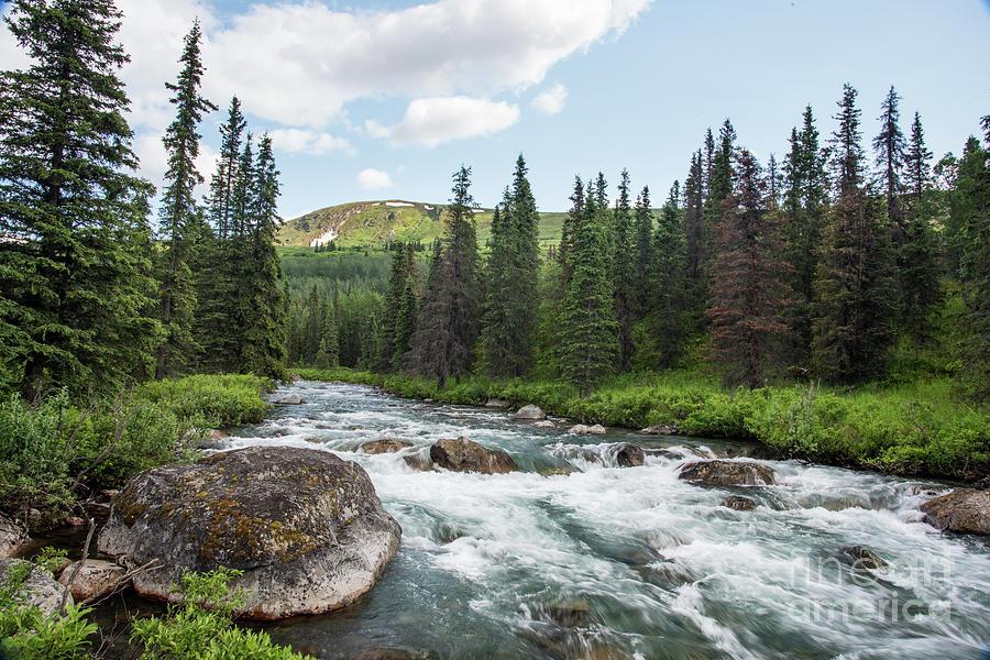 Stream Photograph - Mountain Stream by Paul Quinn