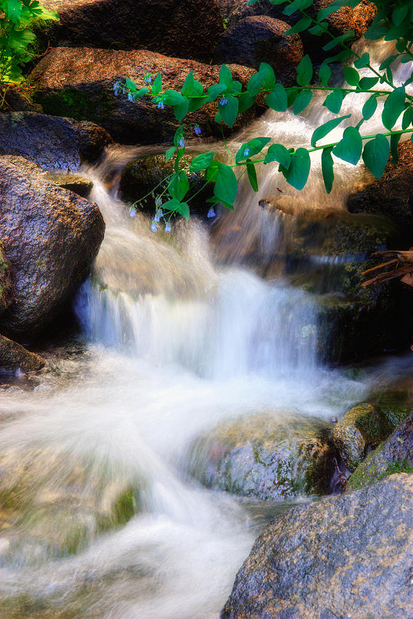 Stream Photograph - Mountain Stream Wasatch Mts. Utah by Utah Images