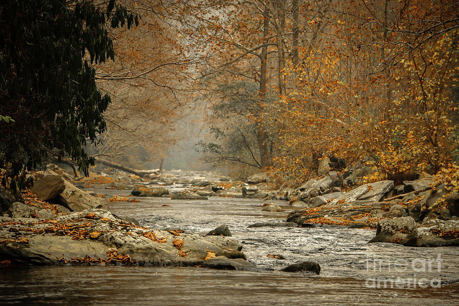 Mountain Photograph - Mountain Stream With Tree Overhang #1 by Tom Claud