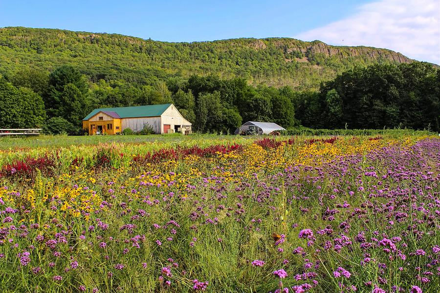 Mountain View Farm Easthampton by Sven Kielhorn