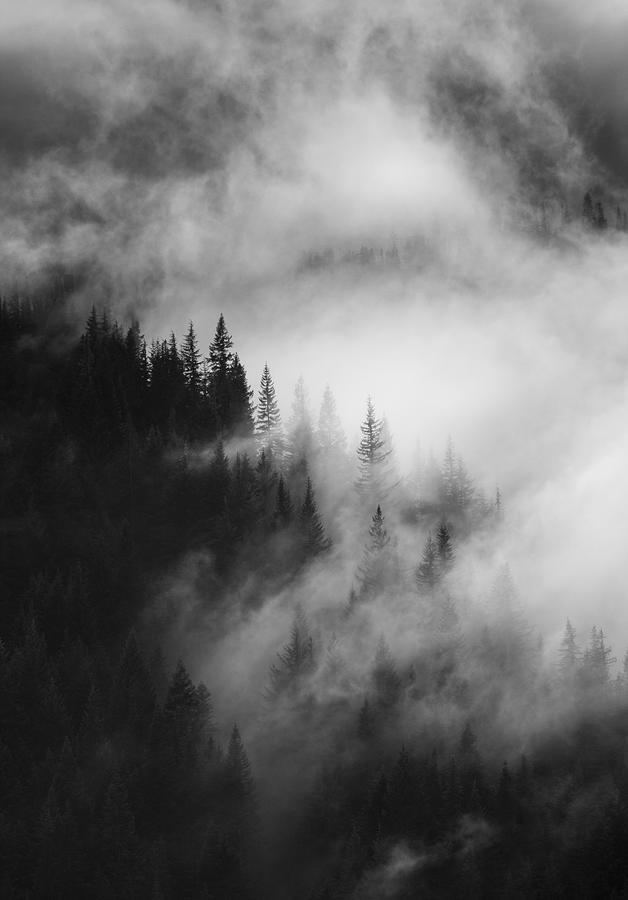 Forest Photograph - Mountain Whispers by Mike Dawson